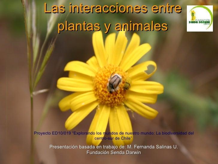 Las interacciones entre plantas y animales Presentación basada en trabajo de: M. Fernanda Salinas U. Fundación Senda Darwi...