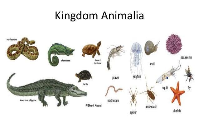 Image of: Kingdom Plantae Kingdom Protista 6 Kingdom Animalia Slideshare Interaction Of Living Things
