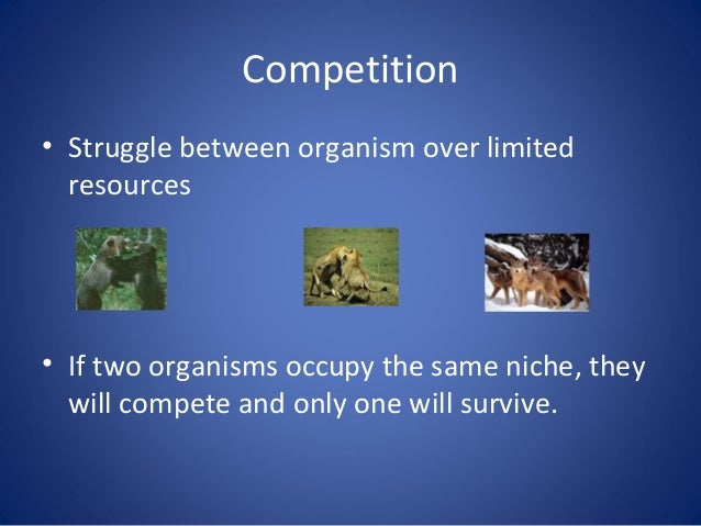 two organisms Soil organisms are generally grouped into two categories: micro fauna/microorganisms and macrofauna the main soil microorganisms include bacteria, fungi, and protozoa.