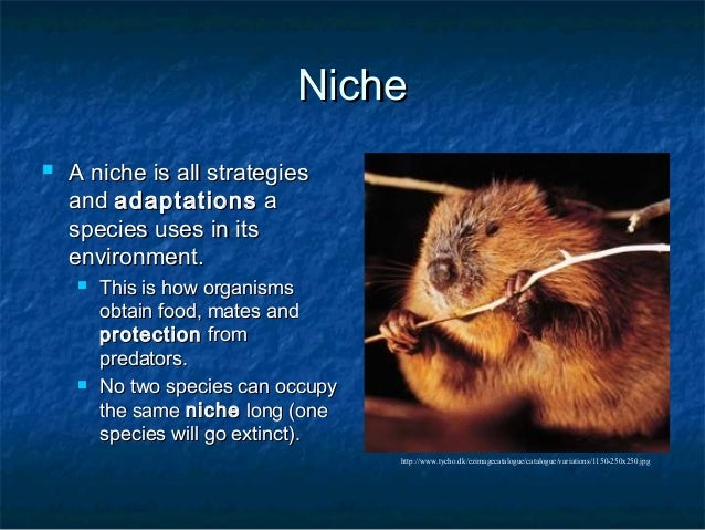 Niche and Habitat - Community Interactions - EVOLUTION AND ECOLOGY ...