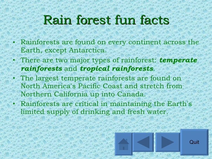 What is a Rainforest?