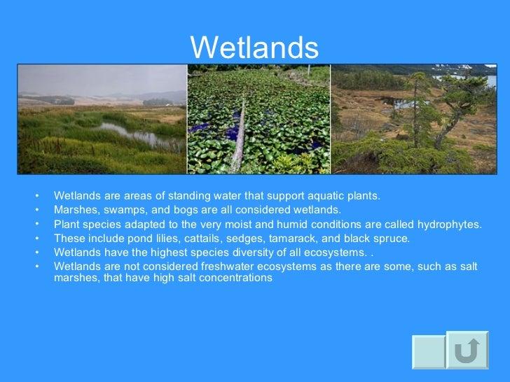 Wetlands Biome