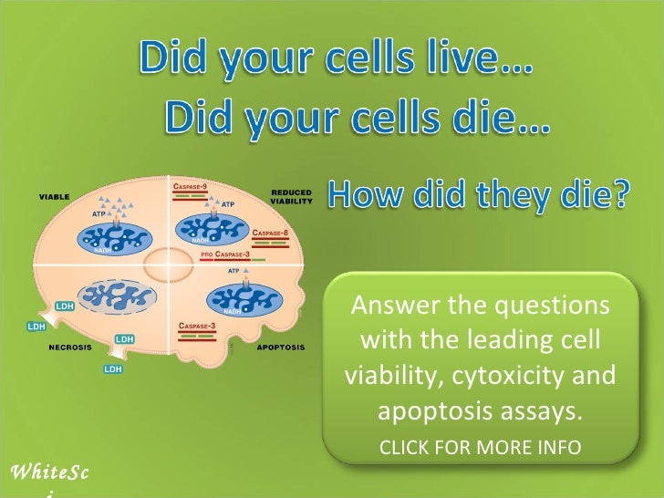 WhiteSci Answer the questions with the leading cell viability, cytoxicity and apoptosis assays. CLICK FOR MORE INFO