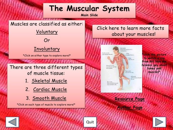 facts of the muscular system – applecool, Muscles