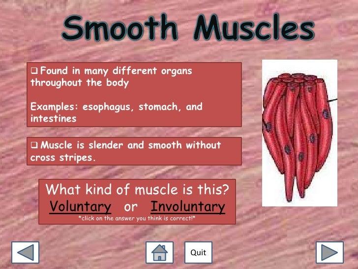 Exploring Muscles