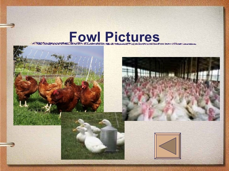 Fowl Pictures