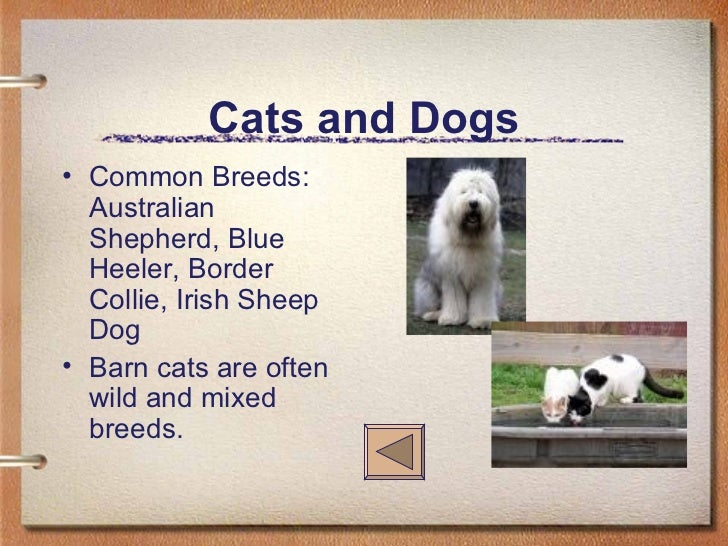 Cats and Dogs <ul><li>Common Breeds: Australian Shepherd, Blue Heeler, Border Collie, Irish Sheep Dog </li></ul><ul><li>Ba...