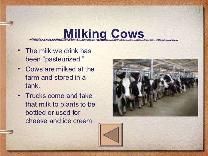 """Milking Cows <ul><li>The milk we drink has been """"pasteurized."""" </li></ul><ul><li>Cows are milked at the farm and stored in..."""