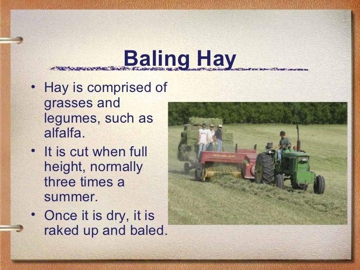 Baling Hay <ul><li>Hay is comprised of grasses and legumes, such as alfalfa.  </li></ul><ul><li>It is cut when full height...