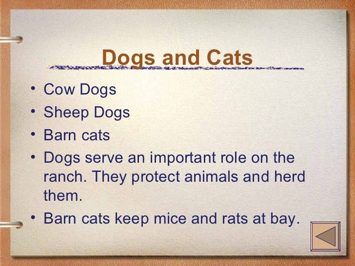 Dogs and Cats <ul><li>Cow Dogs </li></ul><ul><li>Sheep Dogs </li></ul><ul><li>Barn cats </li></ul><ul><li>Dogs serve an im...