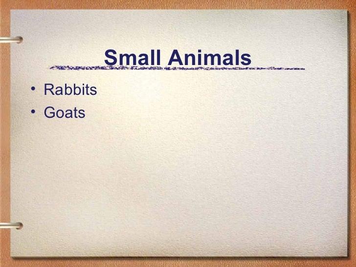 Small Animals <ul><li>Rabbits </li></ul><ul><li>Goats </li></ul>