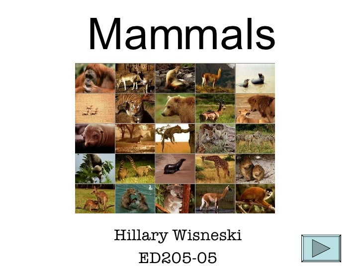 Mammals Hillary Wisneski ED205-05