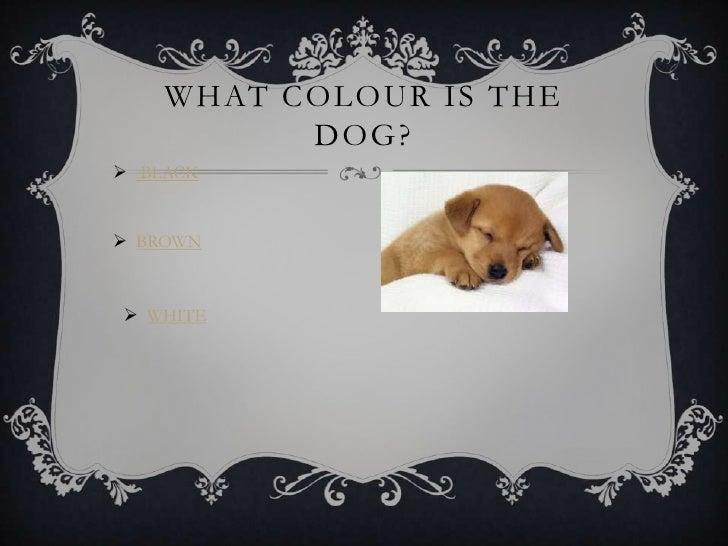 Interactive questions Slide 2