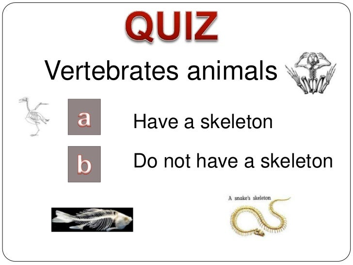 Vertebrates animals       Have a skeleton       Do not have a skeleton