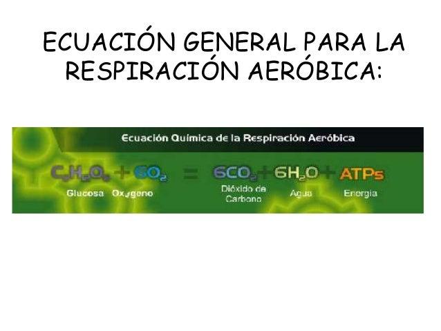 Ecuacion de la fotosintesis y respiracion celular 100