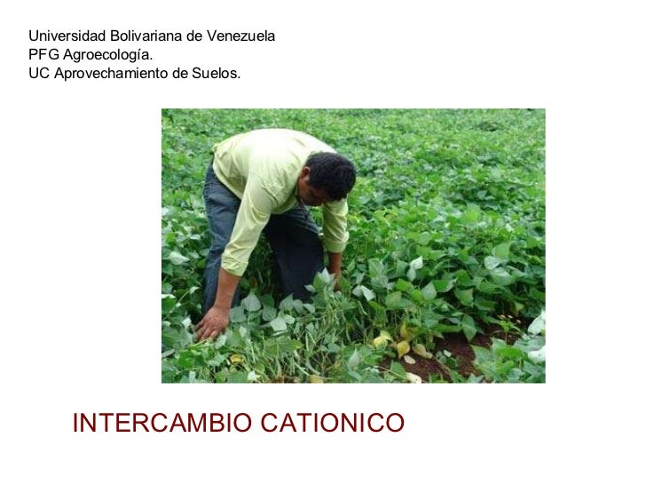Universidad Bolivariana de Venezuela PFG Agroecología. UC Aprovechamiento de Suelos.  INTERCAMBIO CATIONICO