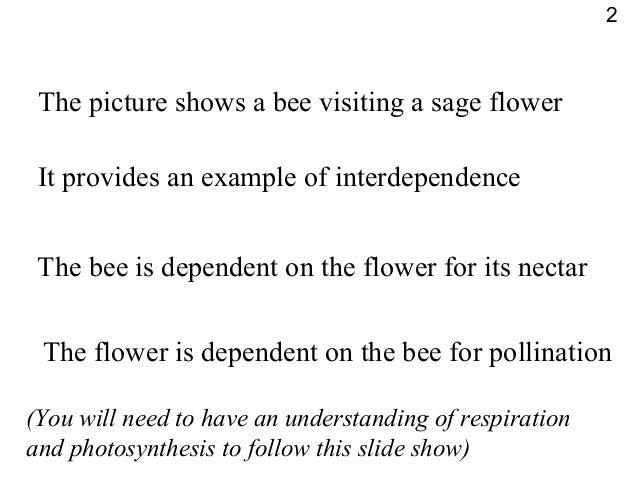 Biology Interdependence