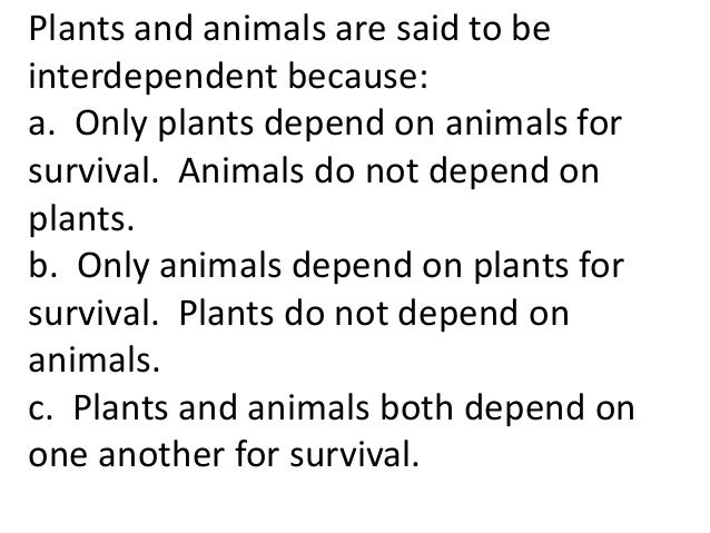 essay on interdependence of plants and animals Explore meaghen dacosta's board grade 4 (interdependence of plants and (interdependence of plants and animals) ecology essay exam ecology exam essay.