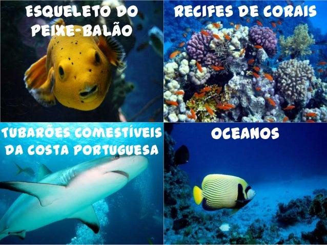 Esqueleto do         Recifes de Corais   Peixe-BalãoTubarões Comestíveis       Oceanosda Costa Portuguesa