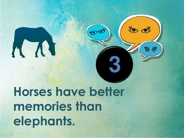 Interesting Facts About Horses by Lariot Europe