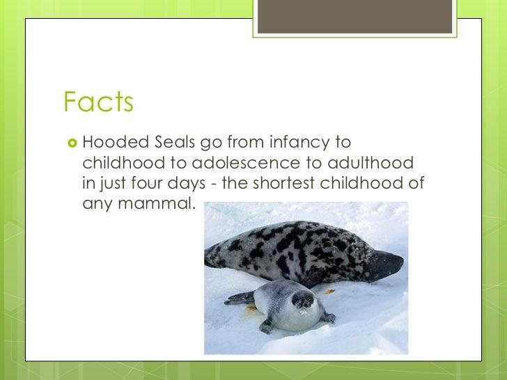 Interesting facts about vertebrates Lamprey Bite