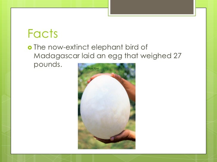 Interesting Facts About Vertebrates - 8 cool facts about madagascar