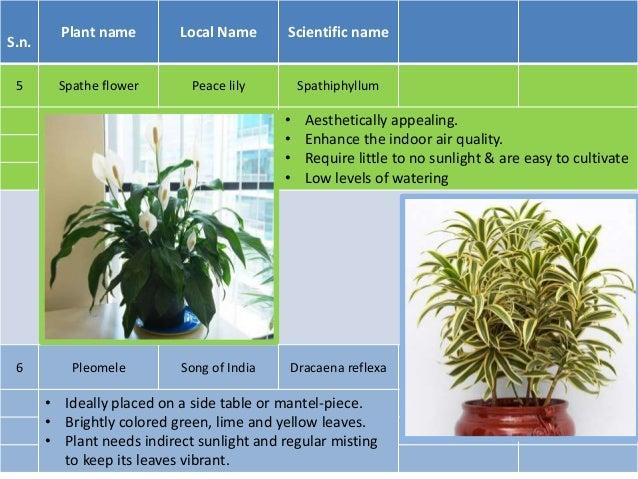 Outdoor Plants That Need Little Light Best To Grow Indoors. No Sunlight ...