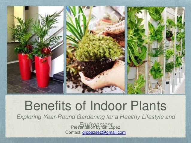 Benefits Of Interior Plants,Budget Friendly Home Bar Ideas On A Budget