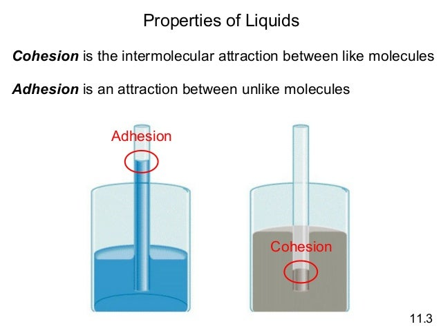 cohesion surface tension and mass flow Effects of cohesion and adhesion surface tension surface tension is the result of cohesive forces between adjacent molecules the molecules in the bulk of a liquid.