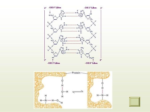 Interacciones dipolo-dipolo: ocurren cuando moléculas con dipolos permanentes interactúan, los dipolos deben ubicarse y so...
