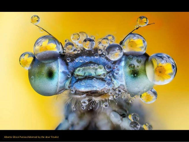 Alberto Ghizzi Panizza'Adorned by the dew' Finalist