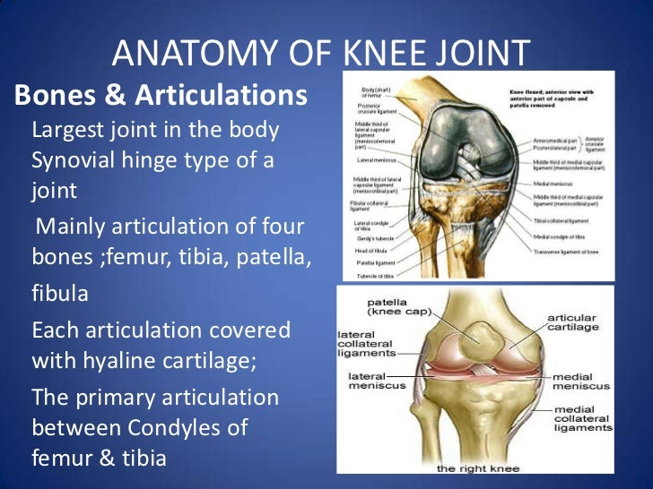 derangement knee ppt