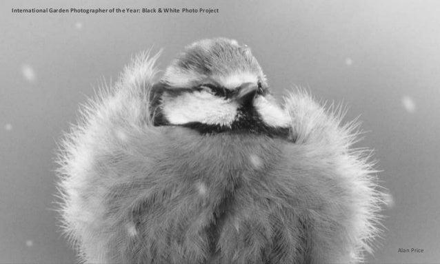 International Garden Photographer of the Year: Black & White Photo Project Alan Price