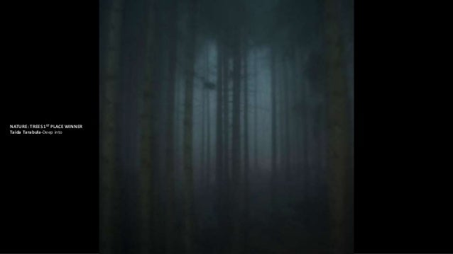 2ND PLACE WINNER:graziano perotti-The enchanted forest