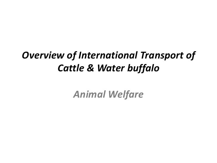 Overview of International Transport of       Cattle & Water buffalo           Animal Welfare
