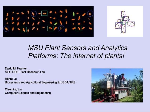 MSU Plant Sensors and Analytics Platforms: The internet of plants! David M. Kramer MSU-DOE Plant Research Lab Renfu Lu Bio...