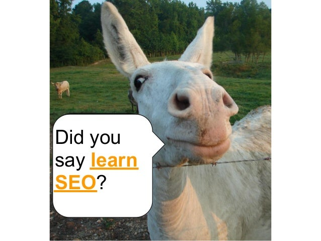 Did yousay learnSEO?