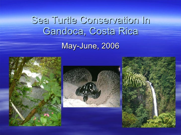 Sea Turtle Conservation In Gandoca, Costa Rica May-June, 2006