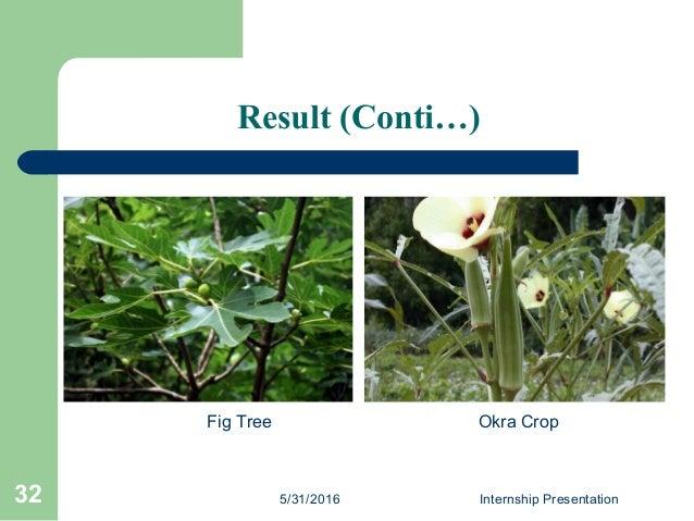 Result (Conti…) 5/31/2016 Internship Presentation32 Fig Tree Okra Crop
