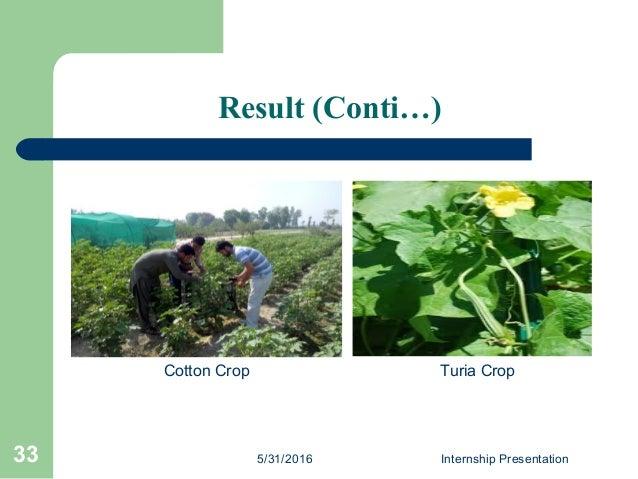 Result (Conti…) 5/31/2016 Internship Presentation33 Cotton Crop Turia Crop