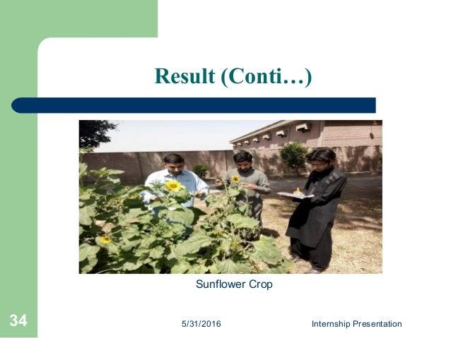Result (Conti…) 5/31/2016 Internship Presentation34 Sunflower Crop