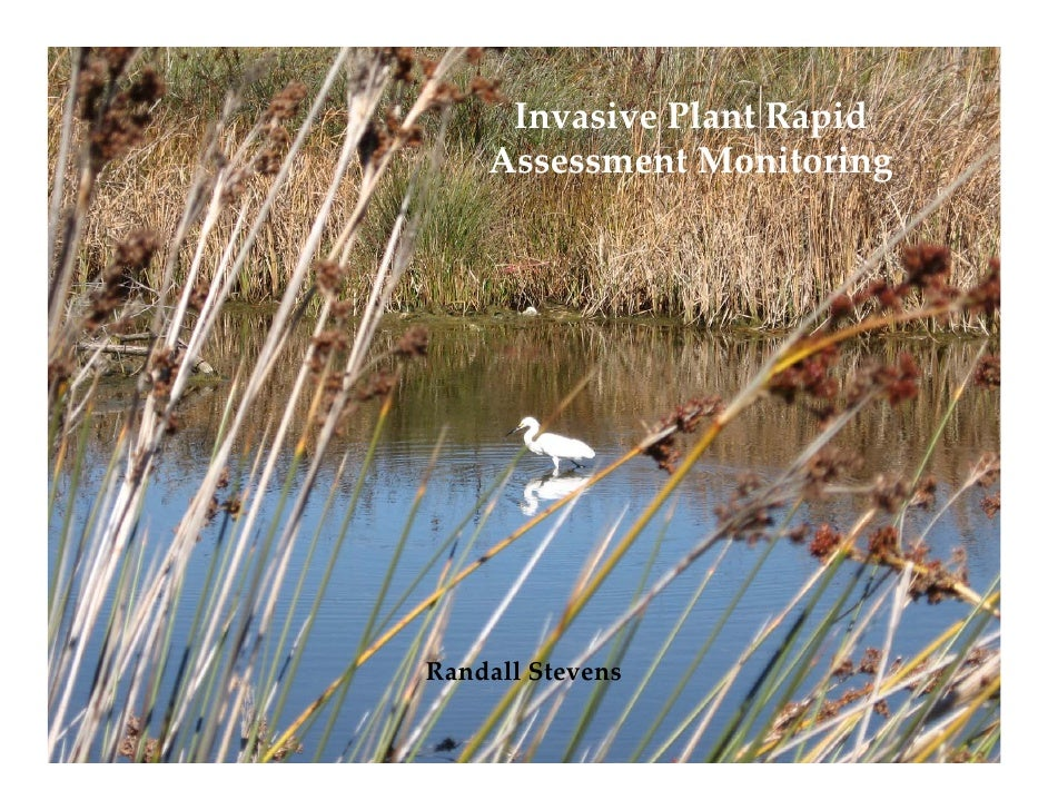 Invasive Plant Rapid      Assessment Monitoring     Randall Stevens