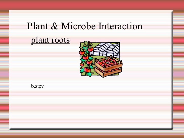 Plant & Microbe Interaction  b.stev plant roots