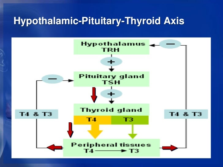 hypothalamic pituitary adrenal axis steroids