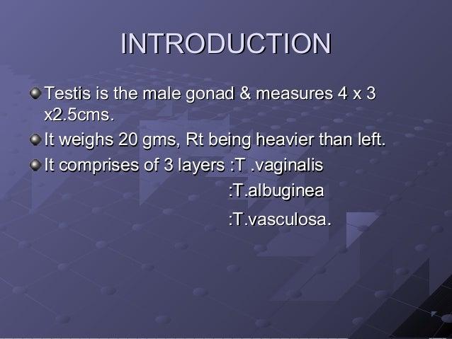 Interpretation of testicular biopsy Slide 2