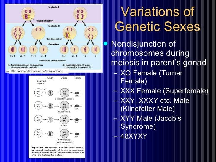 intersex genetics