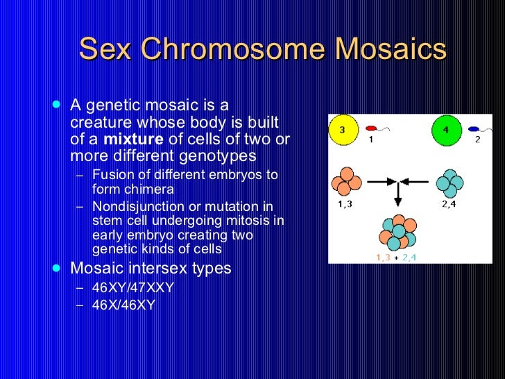 inter sex chromosome pictures images in Norfolk