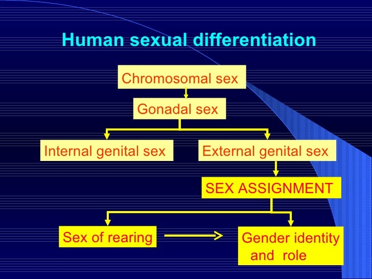 Human sexual differentiation Chromosomal sex   Gonadal sex   External genital sex  Internal genital sex  SEX ASSIGNMENT  G...