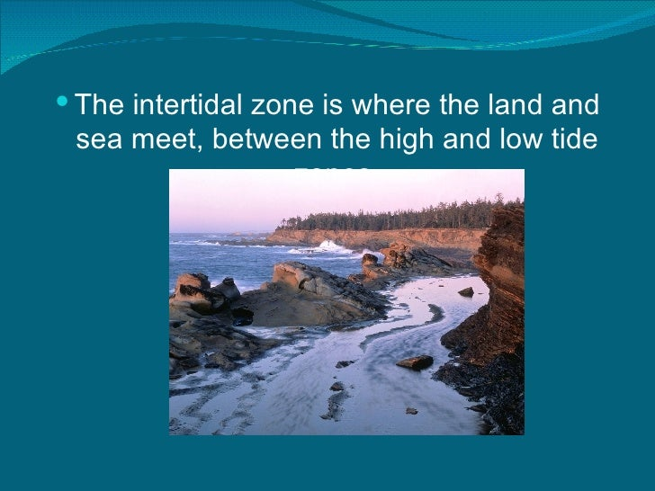 the intertidal zone The intertidal zone -- the area between high and low tides -- is a harsh and unforgiving habitat, subject to the rigors of both the sea and the land it has four distinct physical subdivisions based on the amount of exposure each gets -- the spray zone, and the high, middle, and lower intertidal zones.