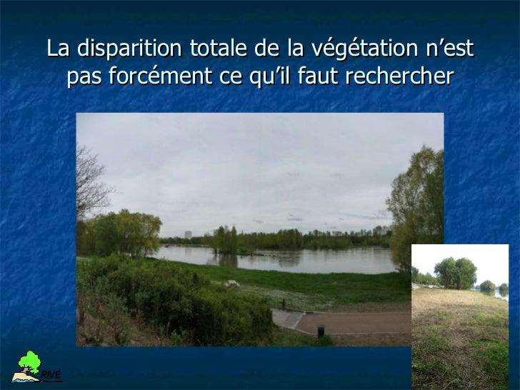 Protection de berge avec des végétaux :                   exemplesR IV E    Restauration de berges / Techniques du génie v...